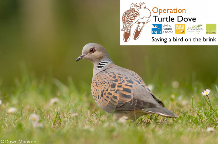 Turtledove190511DM034OTD