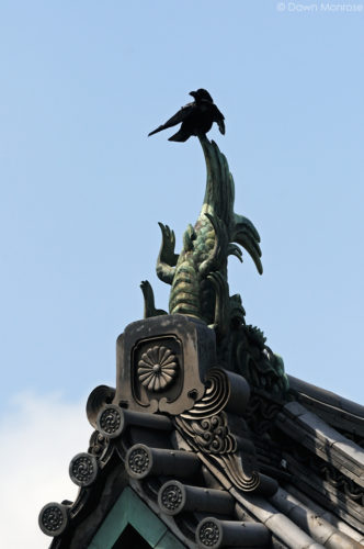 Large-billed Crow, Jungle Crow, Corvus macrorhynchos, perched on top of ornate buildling, Tokyo Imperial Palace, Japan